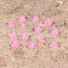 100 Plantas de hierba lavanda, 5-6 mm - Miniatura Heki 1825