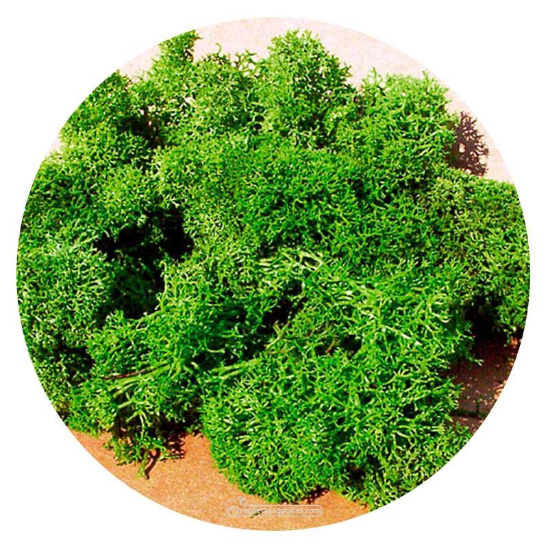 Musgo de Islandia verde claro 75 gr - Miniatura Heki 3219