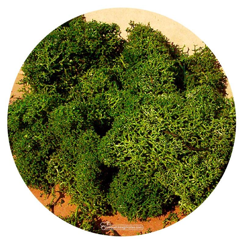 Musgo de Islandia verde medio 30 gr - Miniatura Heki 3218