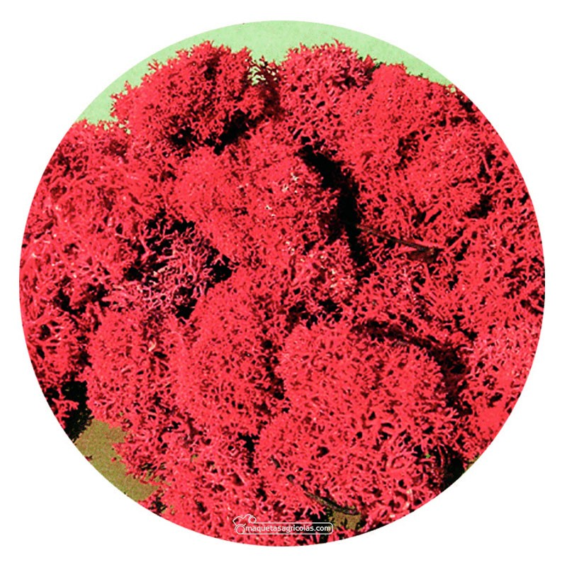 Musgo de Islandia rojo 30 gr - Miniatura Heki 3213