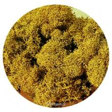 Musgo de Islandia amarillo 30 gr - Miniatura Heki 3215