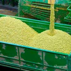 Maiz en grano a granel 100 gr - Miniatura 1:32 - Juweela 23304 ejemplo de presentación