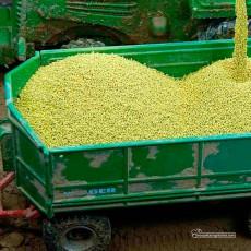 Maiz en grano a granel 150 gr - Miniatura 1:32 - Juweela 23305 ejemplo presentación