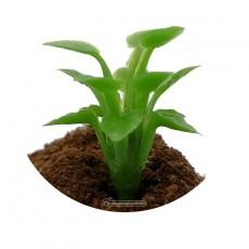 Plantas de remolacha azucarera 50 piezas - Miniatura 1:32 - Juweela 23387